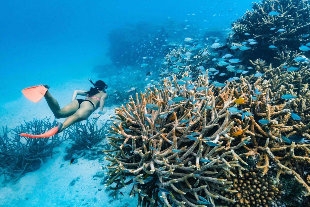 Barrier Reef Activities