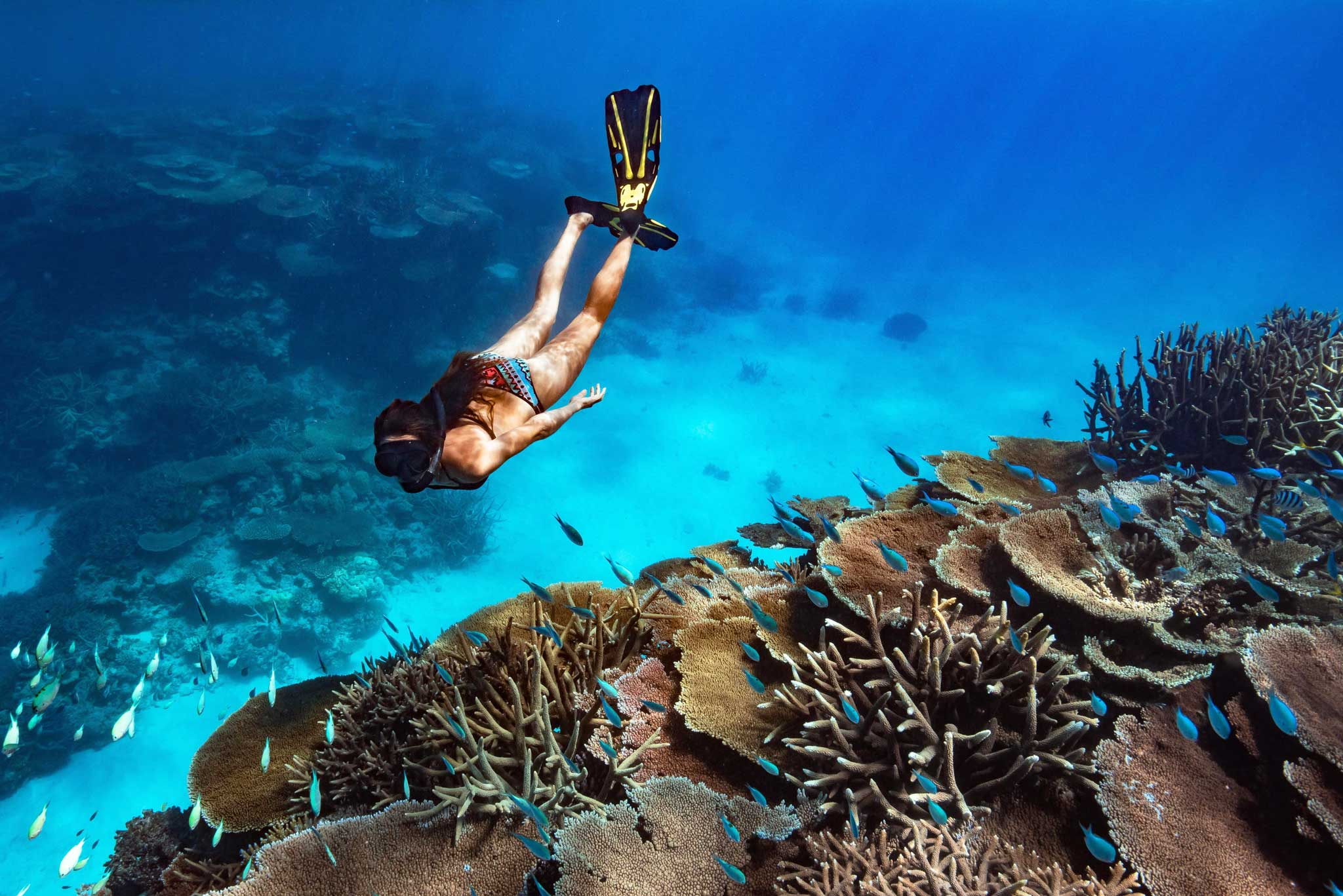 things to do great barrier reef